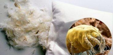 Перьевые клещи в подушках – откуда берутся, в чем опасность, как от них избавиться