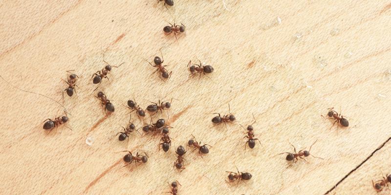 Народные методы борьбы с муравьями на огороде