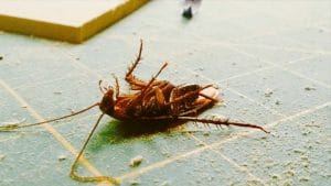 Самый эффективный, действенный и простой способ избавиться от тараканов