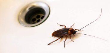 Как навсегда, быстро и эффективно избавиться от тараканов в квартире