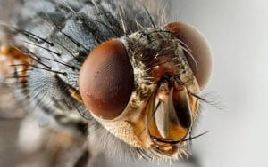 Обработка Цифоксом против мух