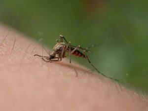 Що ще приваблює комарів?