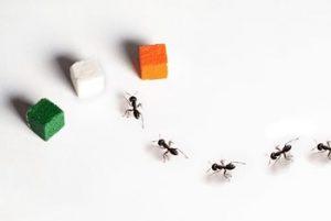Что любят муравьи и что их привлекает