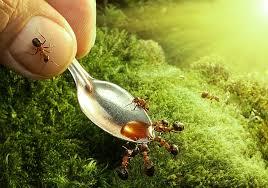 Разнообразие домашних муравьев