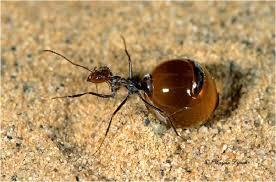 Побеждаем муравьев при помощи специй