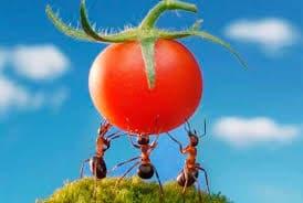 Народные методы от сахарных муравьев