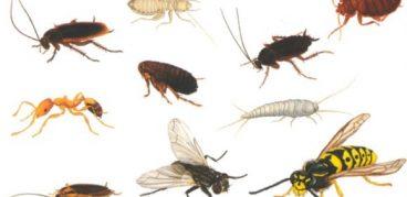 Распространенные виды домашних насекомых