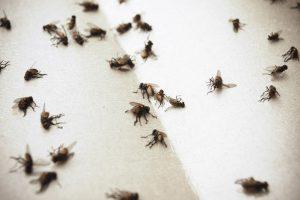 Саморобна отрута від мух