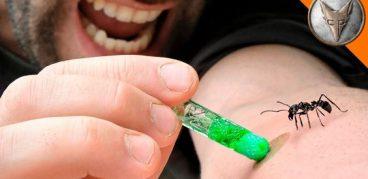 Укусы муравьев: фото, симптомы, последствия