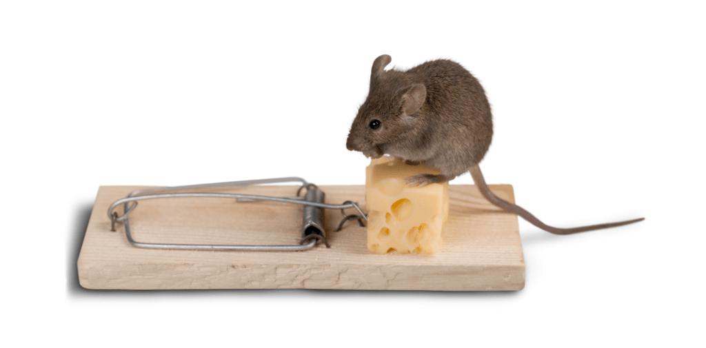 Найефективніші пастки від мишей