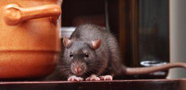 Как вывести мышей из частного дома: Самые эффективные ловушки от мышей
