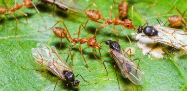 Народные средства борьбы с муравьями на участке