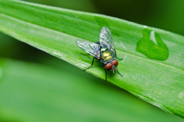 Сколько живет муха без еды и воды