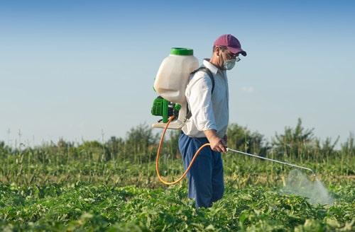 Борьба с луковой мухой химическими средствами