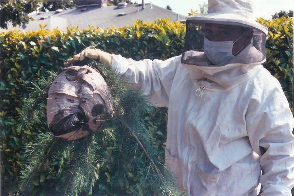 Способы уничтожения гнезд шершней
