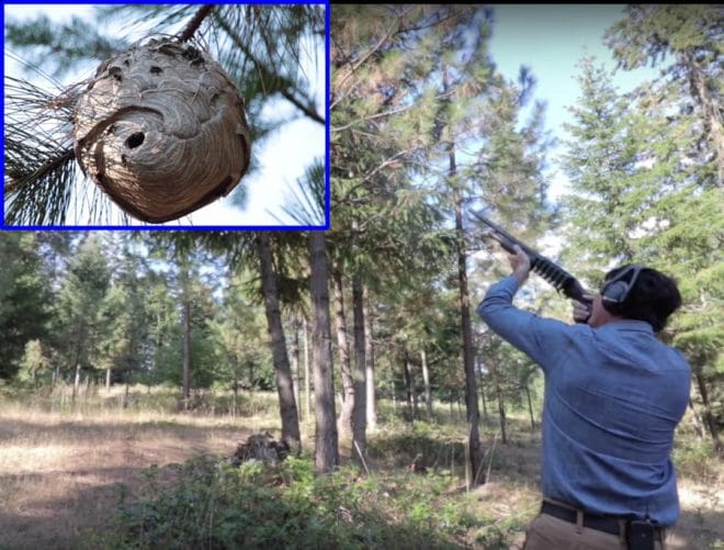 Как найти и ликвидировать гнездо шершней