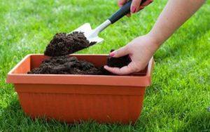 Народные средства для борьбы с морковной мухой