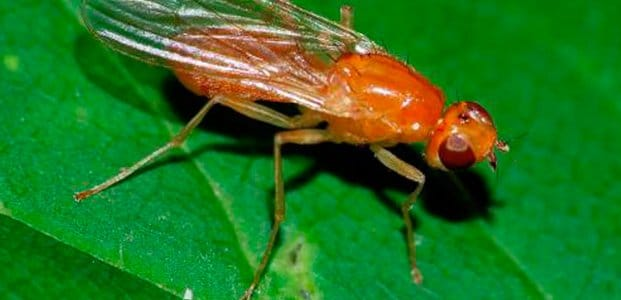 Жизнь насекомого