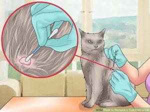 Вытащили клеща у кошки, что делать