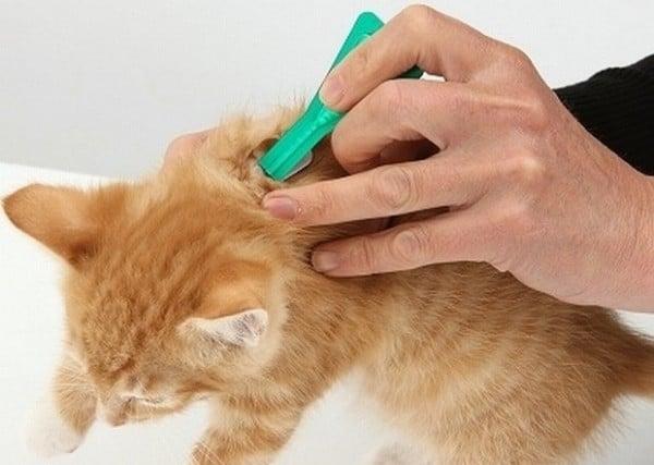 Как действуют капли от блох для кошек?