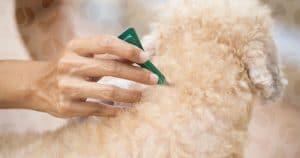 Как использовать капли от клещей и блох для собак